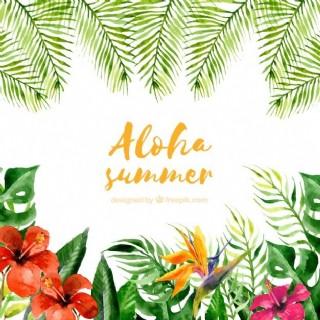 水彩畫的ALOHA夏季背景的植物和花朵